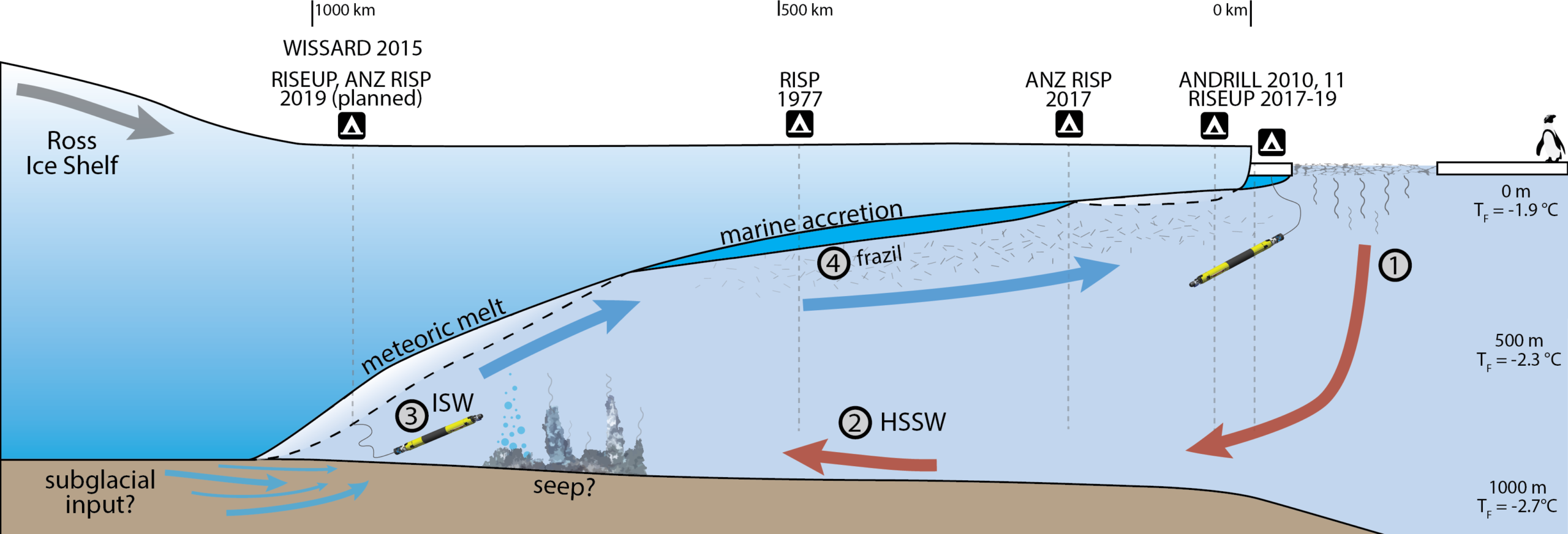 The diagram depicts the unique circulation patterns that result from atmospheric cooling of the surface ocean, sea ice formation, ocean currents, and ice shelf melting to distribute nutrients below Ross Ice Shelf