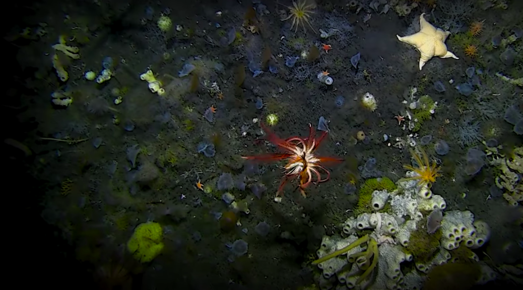 Image of the seafloor with a red sea creatureIcefin is your New Favorite Robot